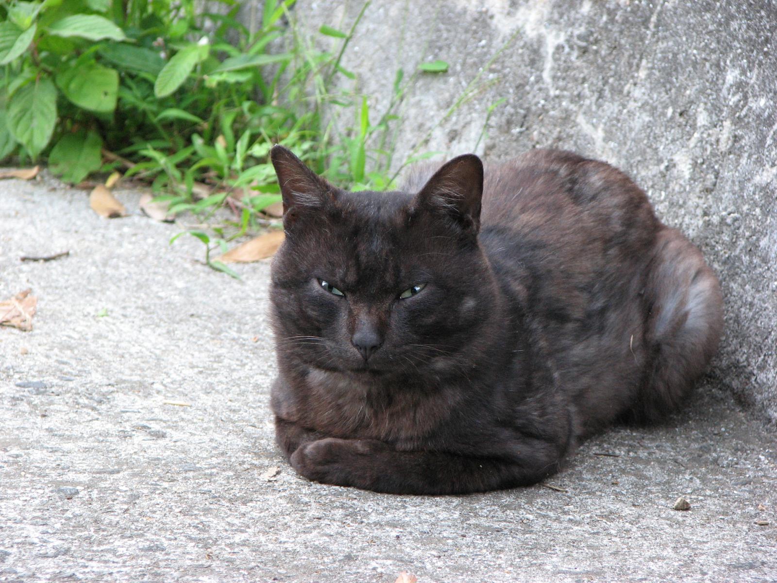 ニャンやねん、あ~っ!ガンを飛ばす黒猫の写真