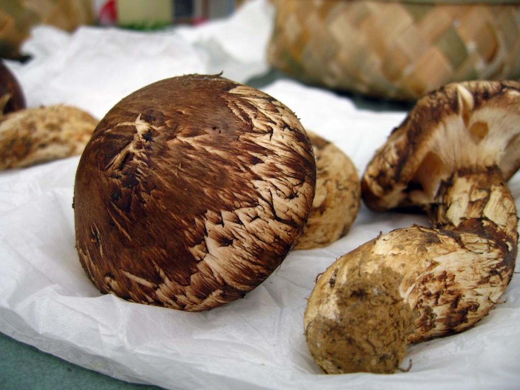 高級食材松茸の無料写真