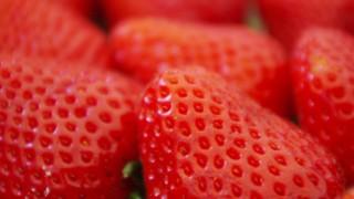 いちご狩り、何個食べると元が取れる?苺のフリー写真