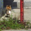 野良の風格!三毛猫の姉御の後姿のフリー写真2枚
