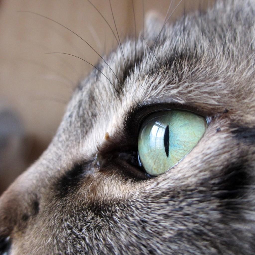 猫 横顔1