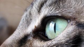 ちょいと男前な猫の横顔の無料写真