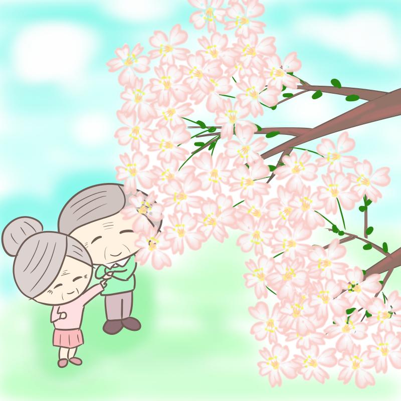 桜を見上げる、おじいさんとおばあさんのイラスト