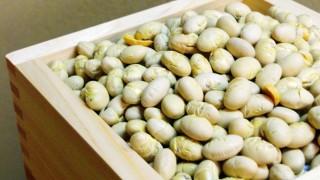 節分の豆の無料画像
