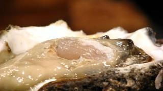 海のミルク!巨大な牡蠣の無料写真