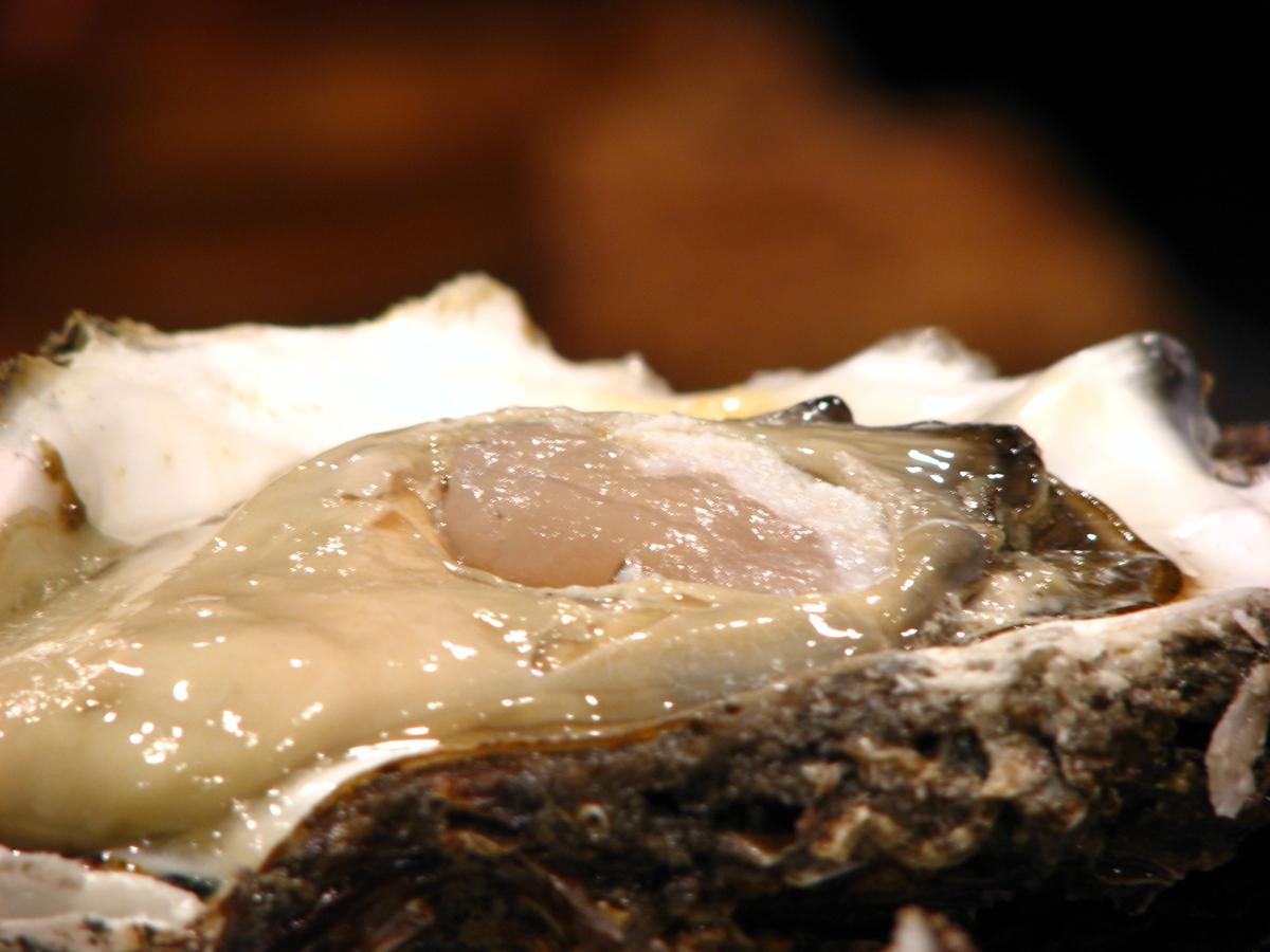 巨大な牡蠣のフリー写真 アイキャッチ