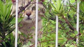 最近出会った野良猫写真(無料)