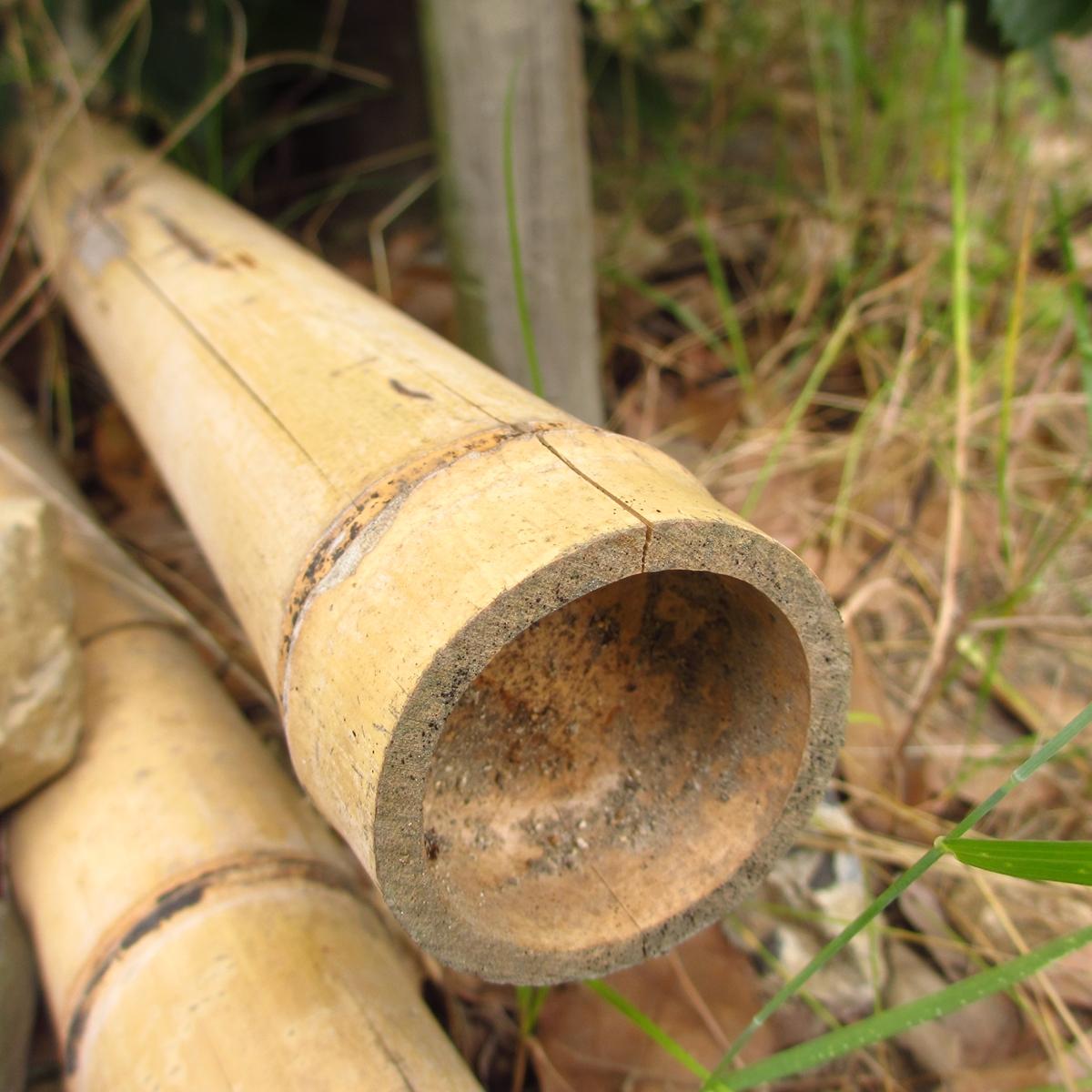 竹のフリー写真20150630 (1)