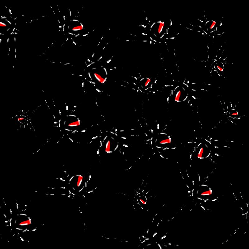 セアカゴケグモ 4