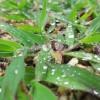きっと名前はあるんだろうね?雨の日の雑草の無料写真