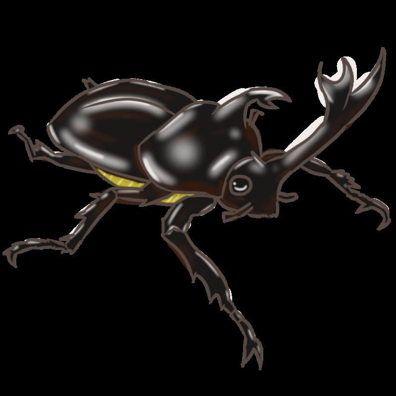 黒いカブトムシ 2015-6-6