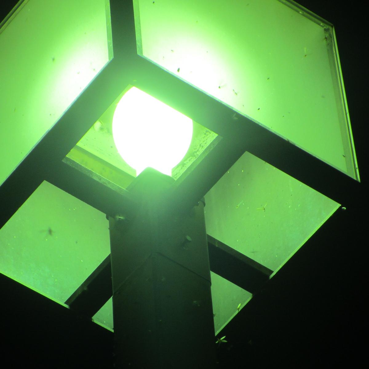 街灯に群がる虫20150710 (7)