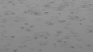 【モノクロ】雨の日の土曜日の無料写真